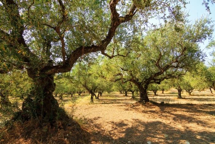 Zante Askos Stone Park