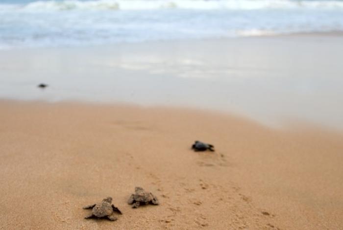 Zante spiaggia delle tartarughe